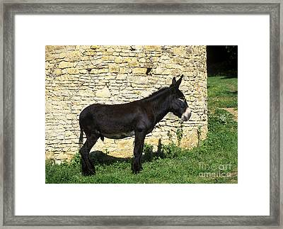 Donkey Stallion Framed Print by Jean-Louis Klein & Marie-Luce Hubert