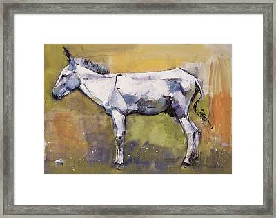 Donkey Stallion, Ronda Framed Print by Mark Adlington