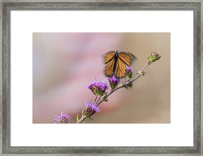 Don't Fly Away Butterfly Framed Print by Thomas Young