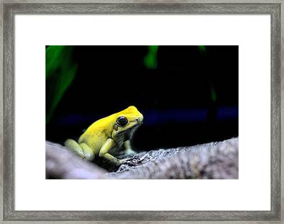 Don't Kiss Me Framed Print by JC Findley