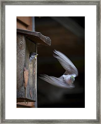 Dont Leave Framed Print by Jean Noren