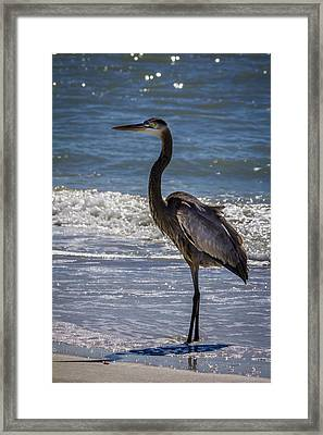 Don't Make Me Fly Framed Print by Marvin Spates