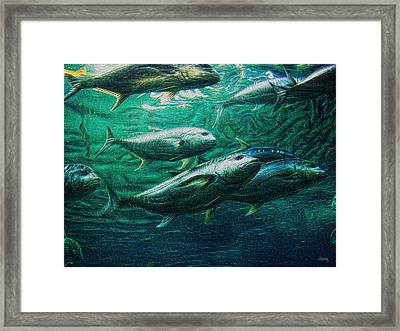 Don't Mess With Bluefin Jack Framed Print by Glenn McCarthy
