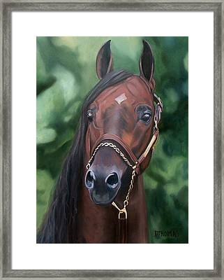 Dont Worry Saddlebred Sire Framed Print by Donna Thomas