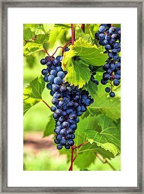 Door County Grape Cluster Framed Print by Christopher Arndt