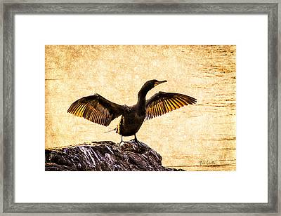 Double-crested Cormorant Framed Print by Bob Orsillo