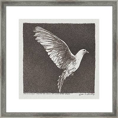 Dove Drawing Framed Print by William Beauchamp