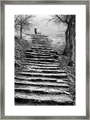 Dovedale Steps Framed Print by John Edwards