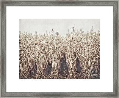 Down The Row 2 Framed Print by Alison Sherrow I AgedPage