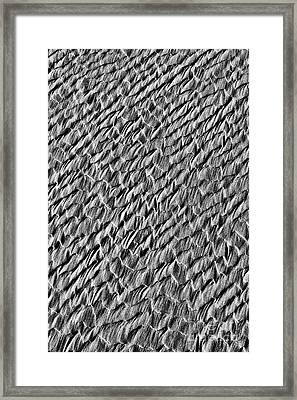 Dragon Scales Framed Print by Tim Gainey