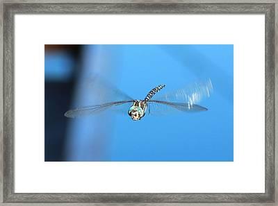 Dragonfly 1 Blue Framed Print by Linda Meyer