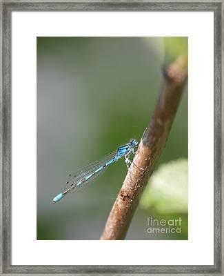 Dragonfly 14 Framed Print by Vivian Martin