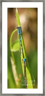 Dragonfly 15 Framed Print by Vivian Martin