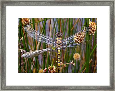 Dragonfly Framed Print by Alison Lee  Cousland