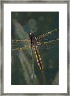 Dragonfly Framed Print by Christopher Reid