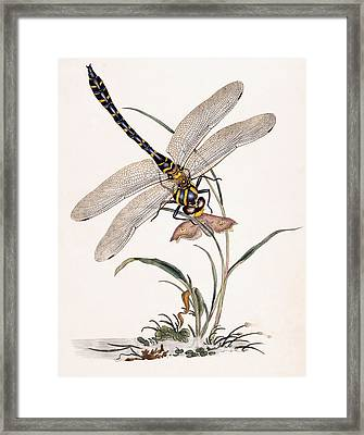 Dragonfly Framed Print by Edward Donovan