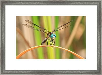 Dragonfly Framed Print by Everet Regal