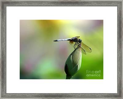 Dragonfly In Wonderland Framed Print by Sabrina L Ryan