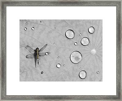 Dragonfly Framed Print by Karl Manteuffel