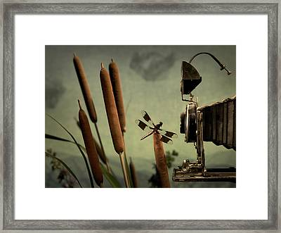 Dragonfly Framed Print by Mark Wagoner