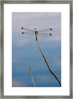 Dragonfly Framed Print by Nikki Taylor