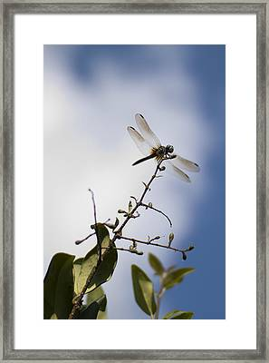 Dragonfly On A Limb Framed Print by Dustin K Ryan