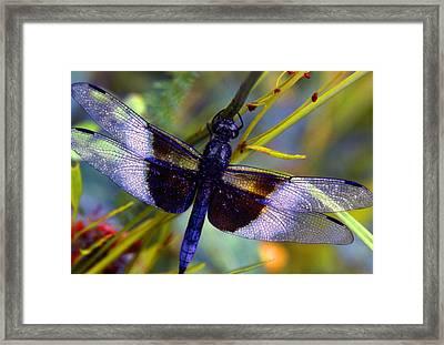 Dragonfly Framed Print by Tony Ramos
