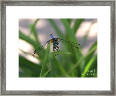 Dragonfly Wit An Attitude Framed Print by Debbie May