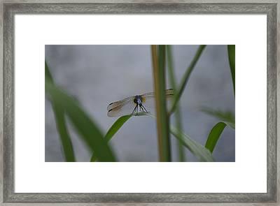 Dragonfly6 Framed Print by Bruce Miller
