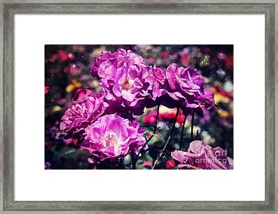 Dramatic Mauve Roses Framed Print by Carol Groenen