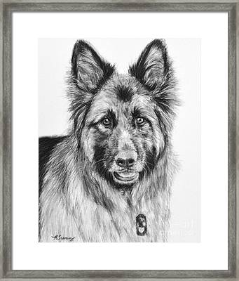 Drawing Of A Long-haired German Shepherd Framed Print by Kate Sumners