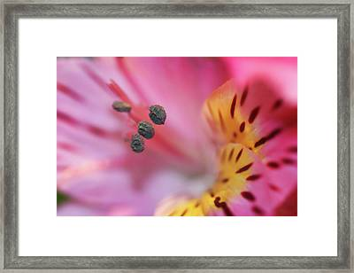 Drawing You In Framed Print by Daphne Sampson
