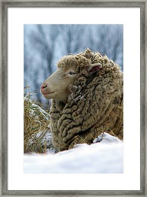 Dreads Framed Print by Paul Wash