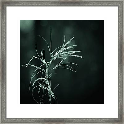 Dream Catcher Framed Print by Mary Amerman