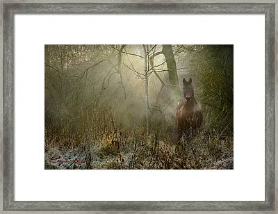 Dream Forest Framed Print by Dorota Kudyba