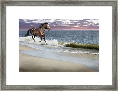 Dreamer On The Beach Framed Print by Barbara Hymer
