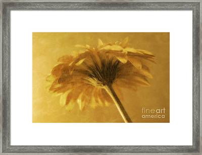 Dreaming Framed Print by Clare Bevan