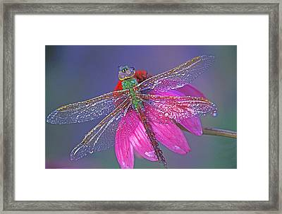 Dreaming Dragon Framed Print by Bill Morgenstern