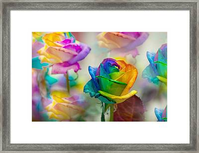 Dreams Of Rainbow Rose Framed Print by Jenny Rainbow