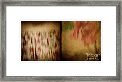 Dreamslip - Rose Curtain Framed Print by Patricia Strand