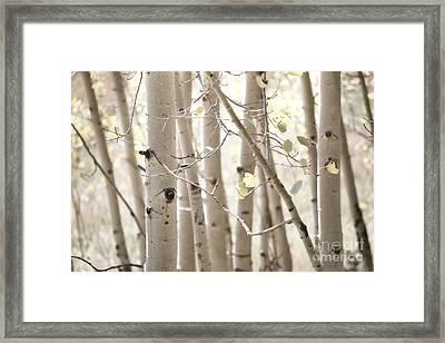 Dreamy Aspen Woodland Framed Print by Andrea Hazel Ihlefeld