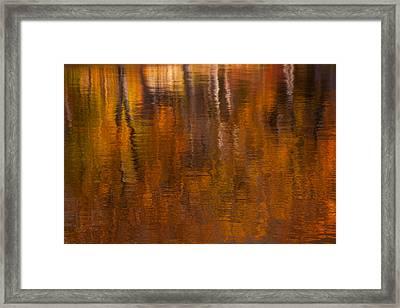 Dreamy Autumn Framed Print by Karol Livote