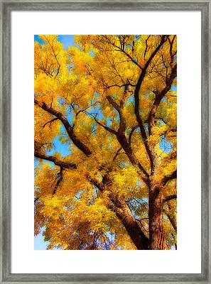 Dreamy Crisp Autumn Day Framed Print by James BO  Insogna
