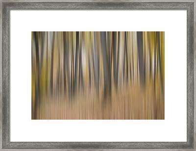 Dreamy Forest Framed Print by Tom Mc Nemar