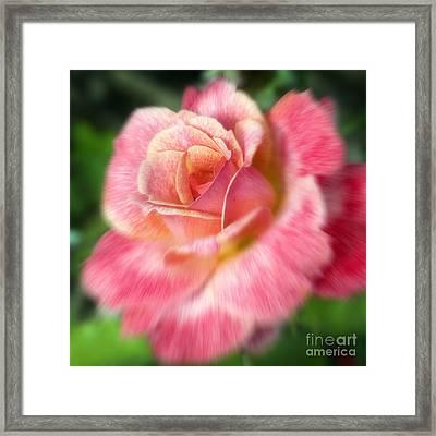 Dreamy Rose Framed Print by Jeannie Burleson