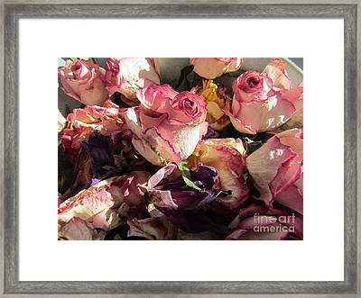 Driede Roses  Framed Print by Joyce Woodhouse