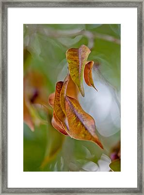 Drifting Away Framed Print by Az Jackson