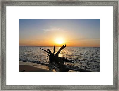 Driftwood Beach Framed Print by Bill Cannon
