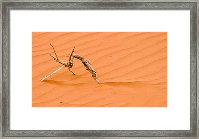 Driftwood In The Sand Framed Print by Adam Romanowicz