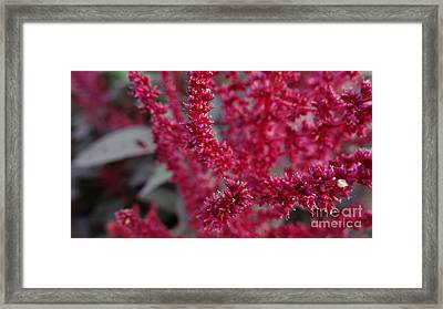 Drink Forever In The Light Framed Print by Justin Moore